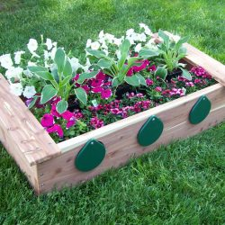 Garden, Box with Peep Holes, Cedar